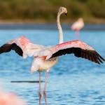 flamingo-2591519_1920